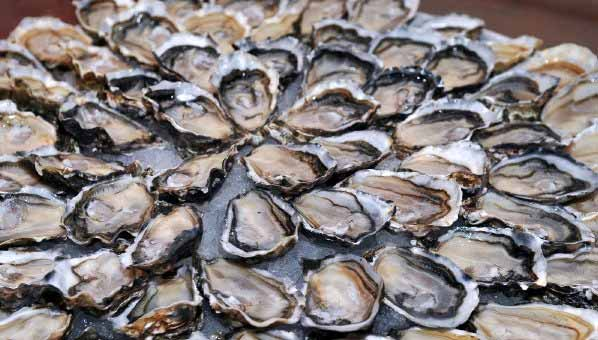 Oesters-Ierland